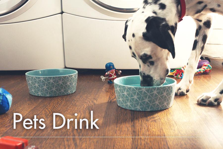 Pets Drink: Water Needs